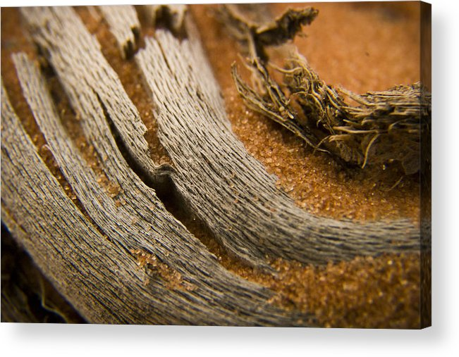 3scape Photos Acrylic Print featuring the photograph Driftwood 2 by Adam Romanowicz