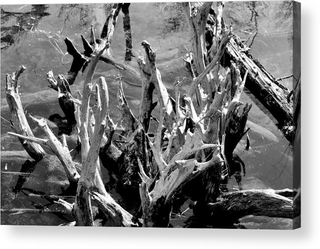 Reflection Acrylic Print featuring the photograph Driftwood On Lost Lake by Michelle Calkins