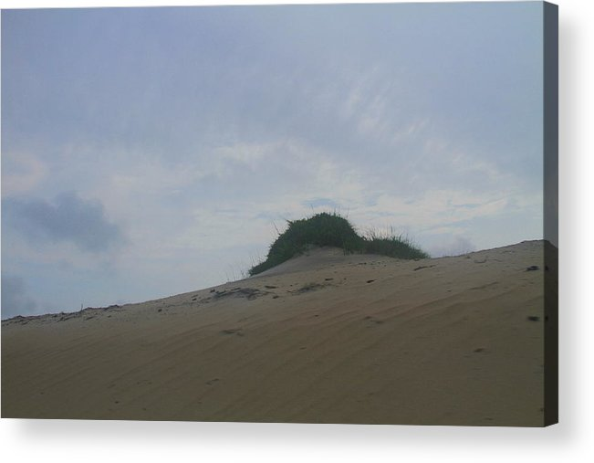 Dune Acrylic Print featuring the photograph Dunes And Grasses 3 by Cathy Lindsey