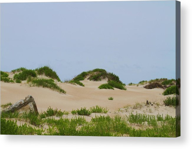 Dune Acrylic Print featuring the photograph Dunes And Grasses 7 by Cathy Lindsey