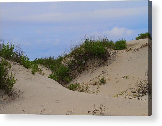 Dune Acrylic Print featuring the photograph Dunes And Grasses 8 by Cathy Lindsey