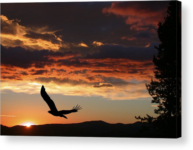 Bald Eagle Acrylic Print featuring the photograph Eagle At Sunset by Shane Bechler