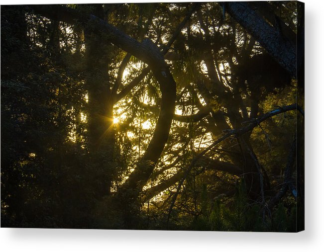Yosemite Acrylic Print featuring the photograph Ear Drum by Brian Williamson