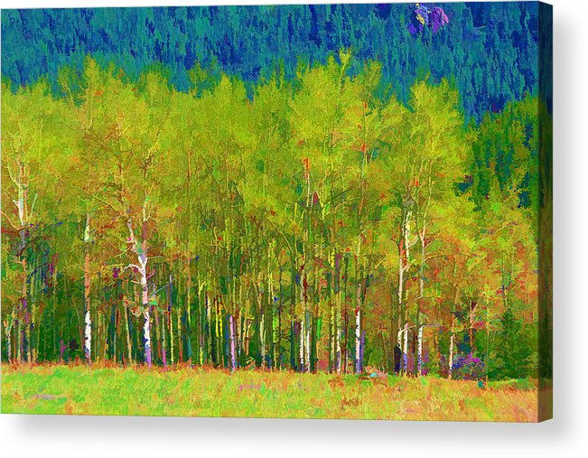 Trees Acrylic Print featuring the photograph Early Summer Aspen by Brian Davis