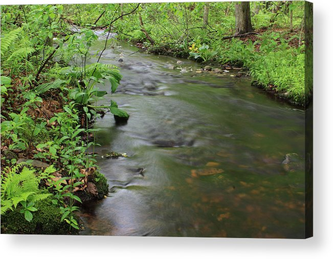 Woodland Acrylic Print featuring the photograph Early Summer At Borden Brook by Andrew Pacheco