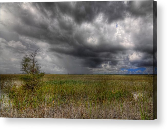 Bush Acrylic Print featuring the photograph Everglades Storm by Rudy Umans