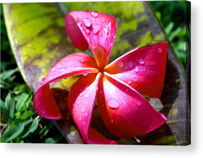 Flowers Acrylic Print featuring the photograph Exotic Beauty by Sophal Benefield