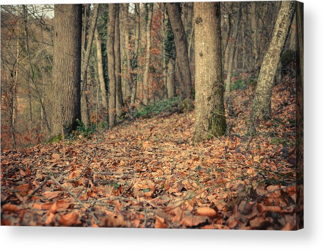 Woods Acrylic Print featuring the photograph Expectation by Taylan Apukovska