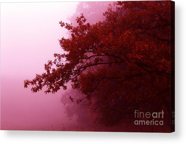 Landscape Acrylic Print featuring the photograph Fall Colors by Tatjana Senz