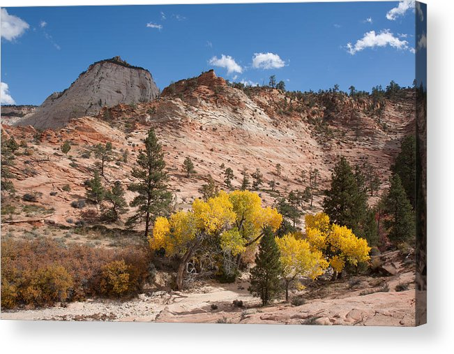 Nature Acrylic Print featuring the photograph Fall Season At Zion National Park by John M Bailey