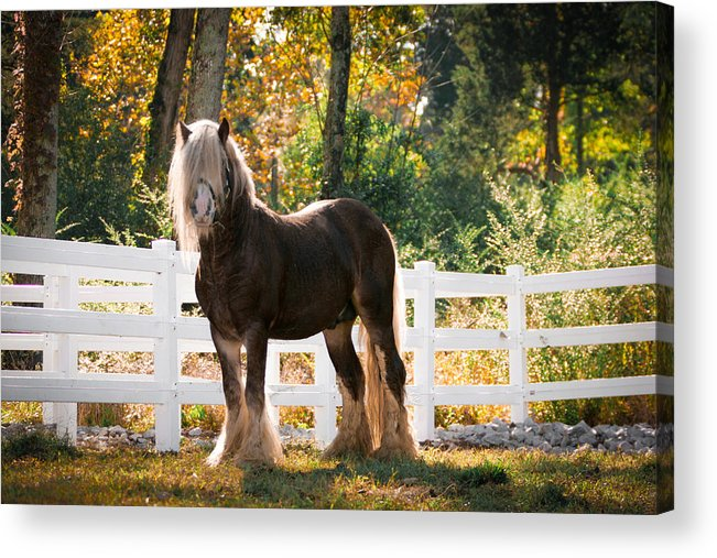 Gypsy Acrylic Print featuring the photograph Fall Splendor by Laurie Comfort