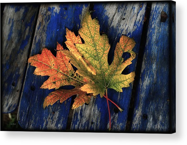 Nature Acrylic Print featuring the photograph Falling For Colour by Linda Sannuti