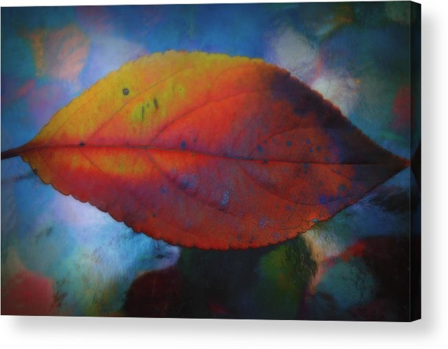 Fauvist Hydrangea Leaf Acrylic Print featuring the photograph Fauvist Hydrangea Leaf by Beth Akerman