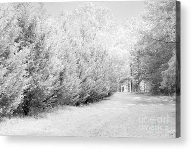 Fence Acrylic Print featuring the photograph Fence by Carolina Mendez