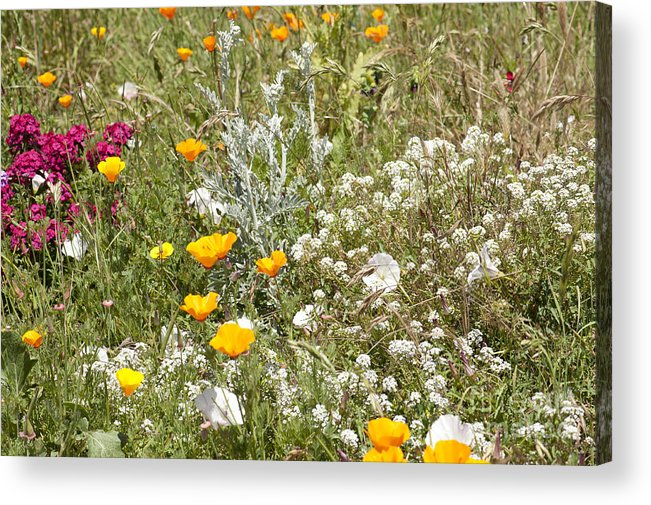Flowers Acrylic Print featuring the photograph Field Of Flowers by Artist and Photographer Laura Wrede