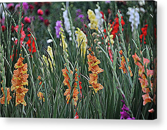 Flower Acrylic Print featuring the photograph Field Of Flowers by Mike Martin