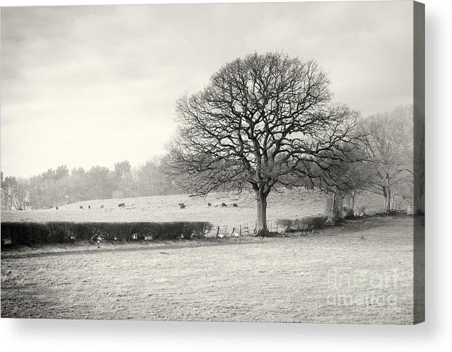 Cloud Acrylic Print featuring the photograph Field Scenery by Peter Acs