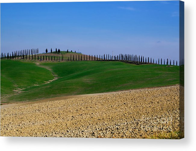 Agriculture Acrylic Print featuring the photograph Field With Cypress Trees by Mats Silvan