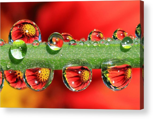 Water Drops Acrylic Print featuring the photograph Firey Drops by Gary Yost
