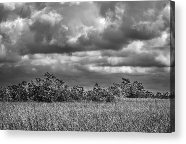 Bush Acrylic Print featuring the photograph Florida Everglades 0184bw by Rudy Umans