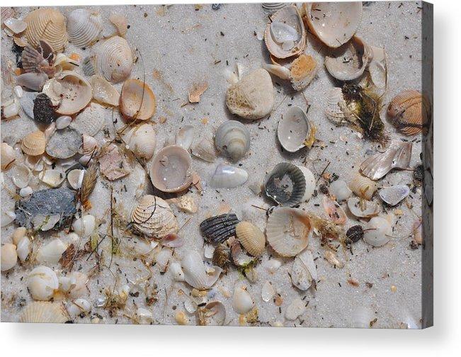 Florida Acrylic Print featuring the photograph Florida Seashells by Vonda Barnett