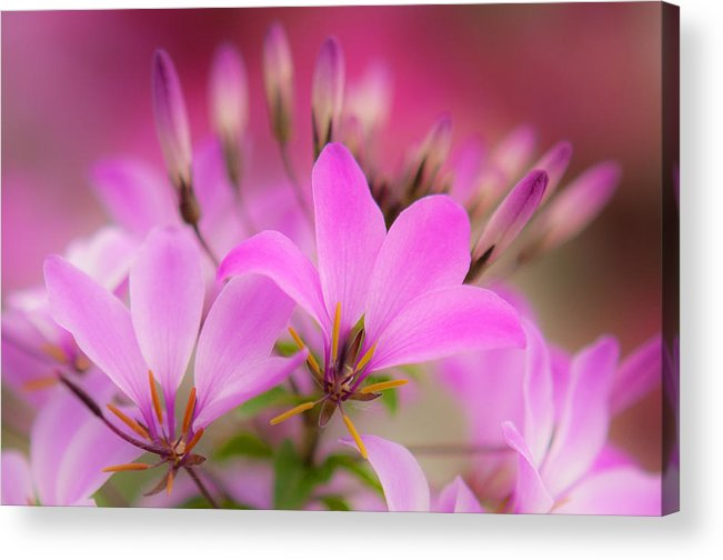 Flower Acrylic Print featuring the photograph Flower 2 by Kelvin Andow
