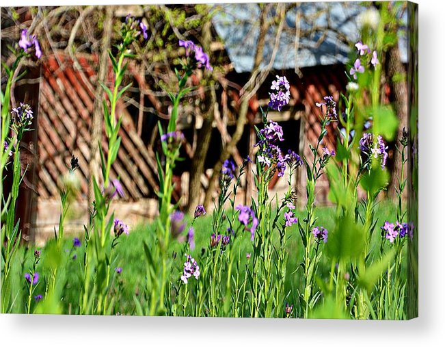 Flowers Acrylic Print featuring the photograph Flowers And Barn by Miss Judith