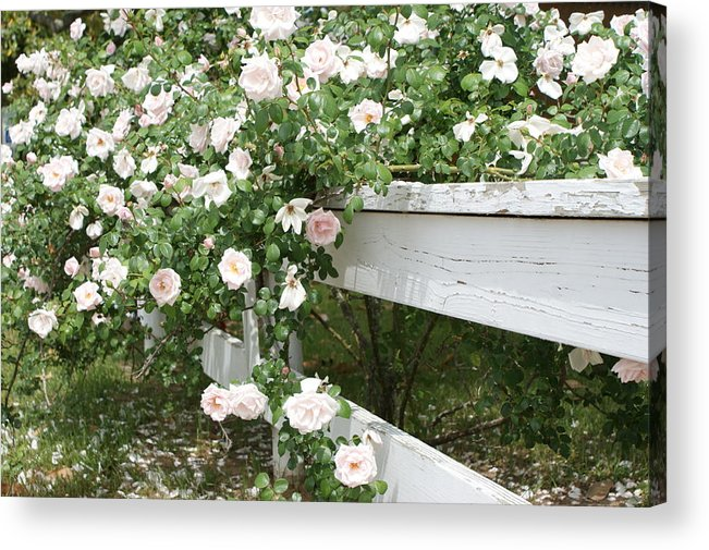Flowers Acrylic Print featuring the photograph Flowers On Fence by L A H