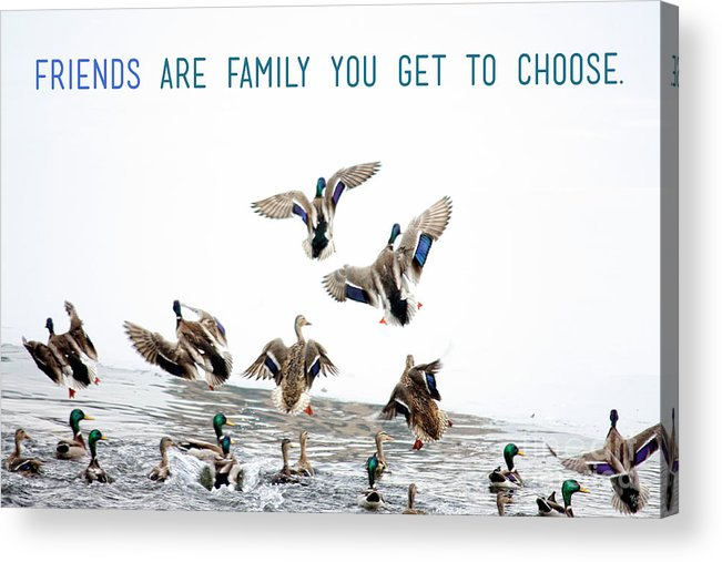 Quotes Acrylic Print featuring the photograph Flying Ducks And A Friends Quote by Nishanth Gopinathan