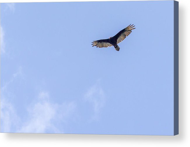 2013 Acrylic Print featuring the photograph Flying High by Terry Thomas