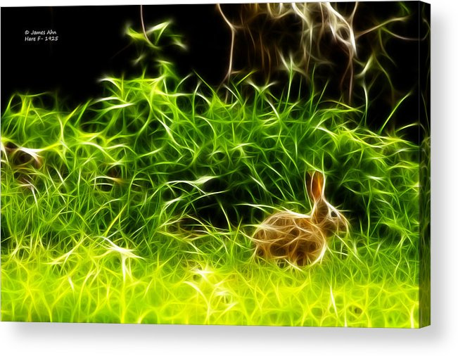 Hare Acrylic Print featuring the photograph Fractal - California Hare - 1925 by James Ahn