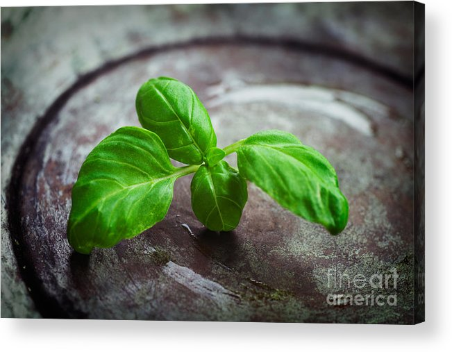 Aroma Acrylic Print featuring the photograph Fresh Basil by Mythja Photography