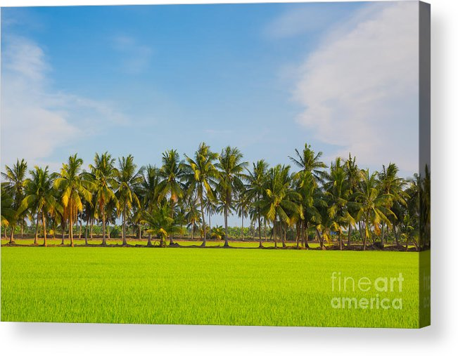 Rice Acrylic Print featuring the photograph Fresh Green Rice Field by Pushish Donhongsa