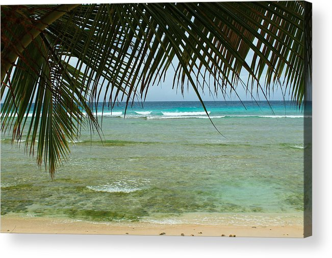 Barbados Acrylic Print featuring the photograph Fronds by Catie Canetti