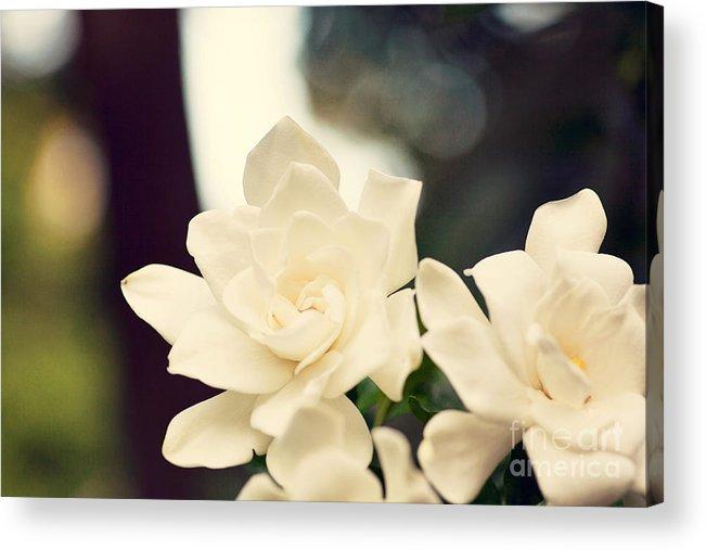Summer Acrylic Print featuring the photograph Gardenias by Erin Johnson