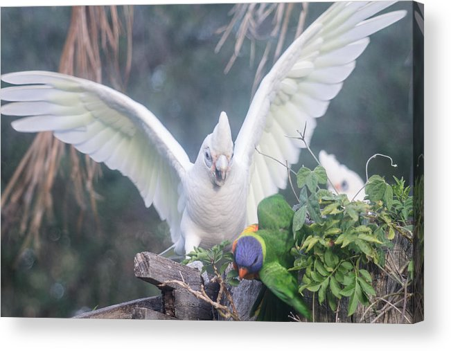 Birds Acrylic Print featuring the photograph Get Off by Michael Podesta