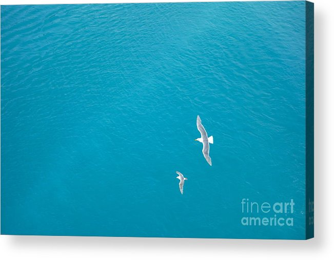 Birds Acrylic Print featuring the photograph Gliding Seagulls by Jacqueline Athmann
