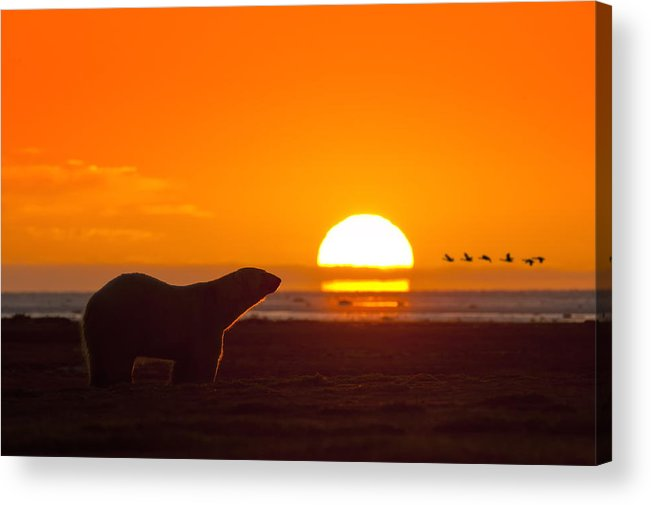 Sunset Acrylic Print featuring the photograph Global Warming by Paul Jodoin
