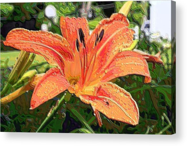 Lily Acrylic Print featuring the photograph Good Afternoon by Rich D'Amato