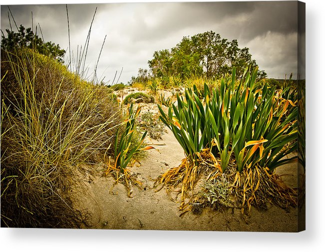 Greece Acrylic Print featuring the photograph Grass And Sand Of Elafonisi by Oleg Koryagin