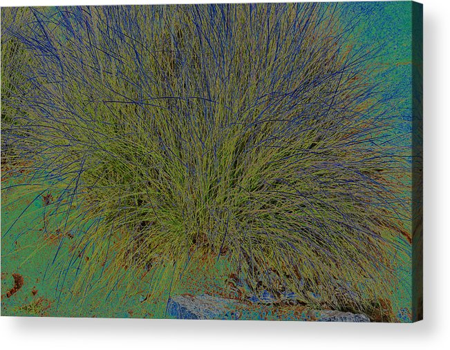 Grass Effects-2 Acrylic Print featuring the photograph Grass Effects-2 by Anand Swaroop Manchiraju