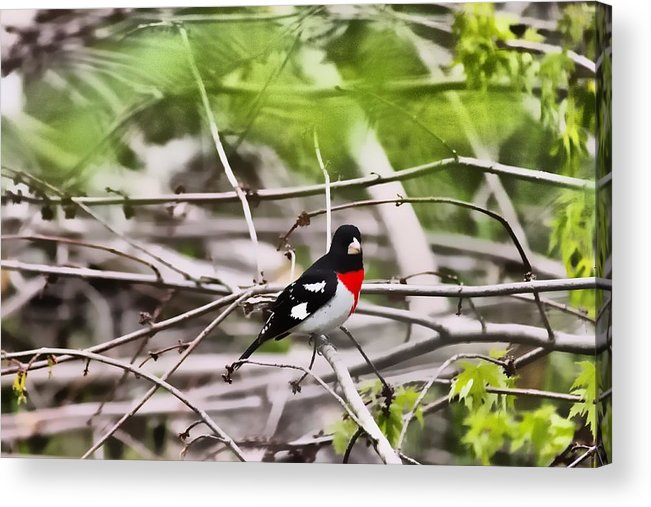 Digital Art Acrylic Print featuring the digital art Grosbeaks by John Delong