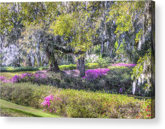 Azalea Acrylic Print featuring the photograph Grounds Of Middleton by Dale Powell