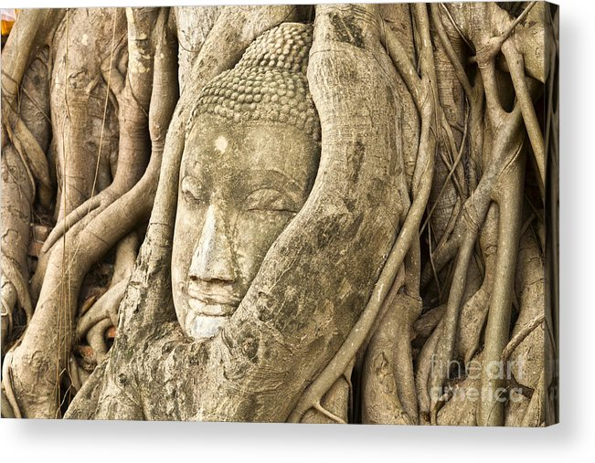 Ancient Acrylic Print featuring the photograph Head Of Buddha Ayutthaya Thailand by Colin and Linda McKie