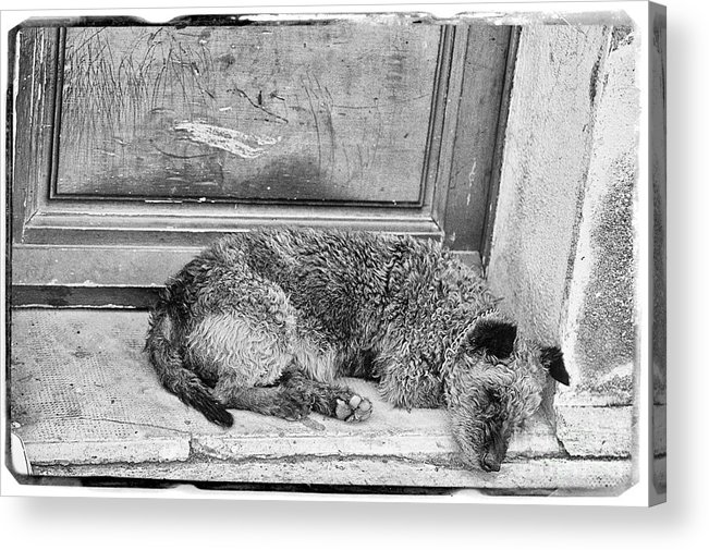 Photograph Acrylic Print featuring the photograph Homeless Dog by Jan Tyler