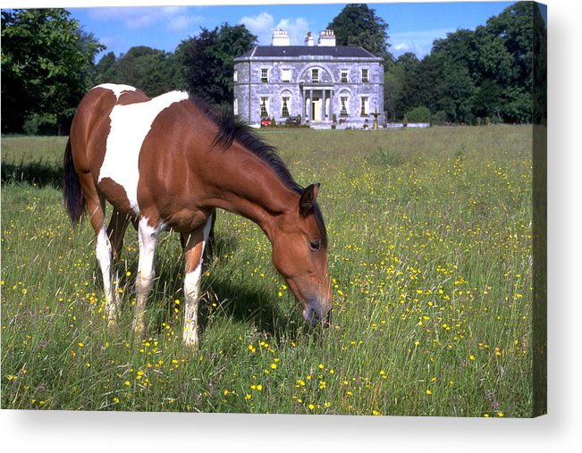 Horse Acrylic Print featuring the photograph Horse Grazes Near St. Clarens by Carl Purcell