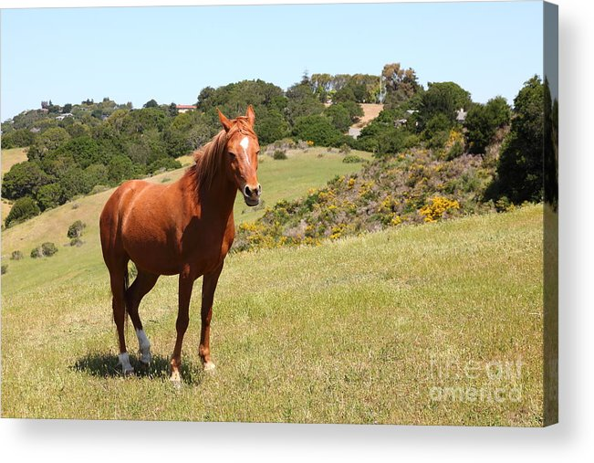 Marin Acrylic Print featuring the photograph Horse Hill Mill Valley California 5d22679 by Wingsdomain Art and Photography