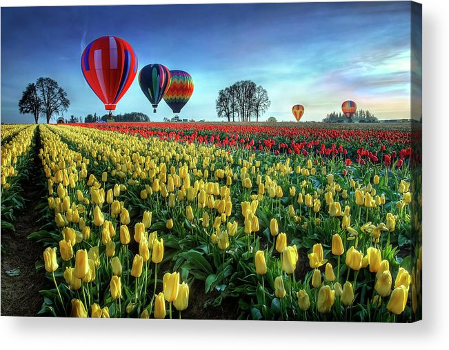 Tulip Acrylic Print featuring the photograph Hot Air Balloons Over Tulip Field by William Lee