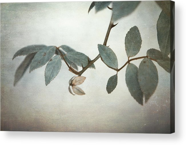Leaves Acrylic Print featuring the photograph How Delicate This Balance by Laurie Search