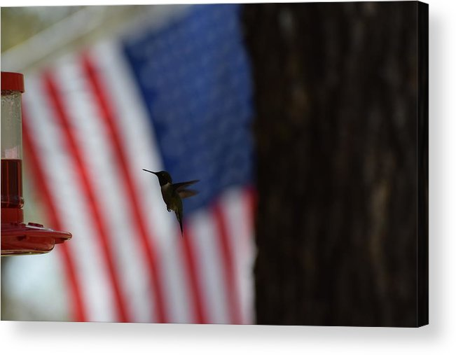 Bird Acrylic Print featuring the photograph Hummingbird Art 230 by Lawrence Hess